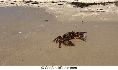 Human hand touches the crab, summer day