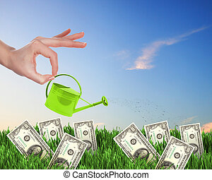 Human hand watering money tree