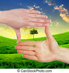 Human hands and green plant - Collage with human hand...