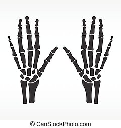 Human hands bones - Vector illustration hands bones....