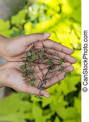 Human hands holding a green plant