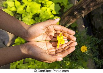 Human hands holding a yellow flower