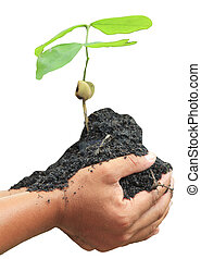 Human hands holding green small plant