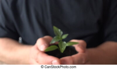 Human Hands Holding Green Small Plant. New Life Concept.