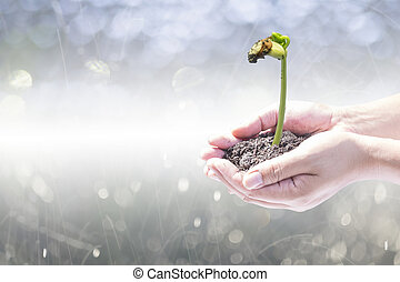 Human hands holding small plant