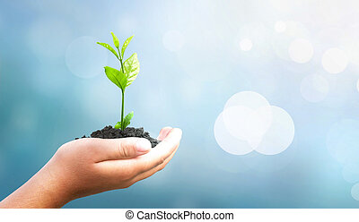 Human hands holding tree over blurred blue sky and water background
