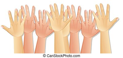 Human Hands on White Background