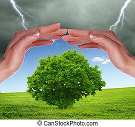 human hands protecting tree