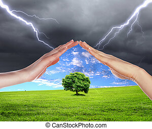 human hands protecting tree from thunderstorm and lighting
