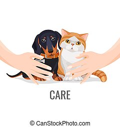 Human hands take care about cute pets dog and cat - Human...