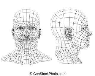human head 3d - human head 3d wireframe front and side view...