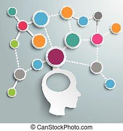 Human Head Brain Network