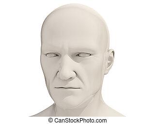 Human head isolated