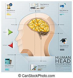 Human Head With Brain Three Dimension Polygon Education...