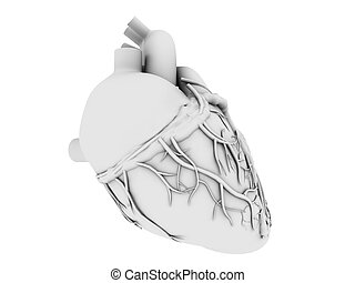 human heart - 3d rendered anatomy illustration of a grey ...