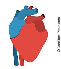 human heart anatomy isolated icon design