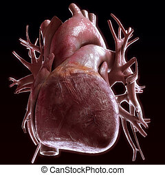 human heart anatomy on black background - high quality 3d...