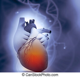 Human heart anatomy on science background