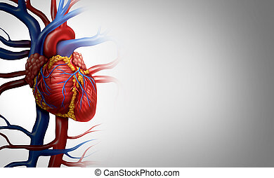 Human Heart Background - Human heart anatomy from a healthy ...