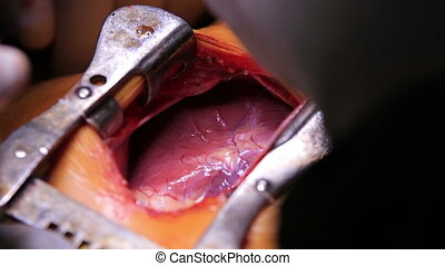 Human Heart Beating - Human heart beating close-up during...