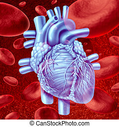 Heart Blood Flow - Human Heart Blood Flow anatomy with...