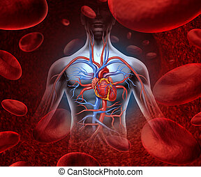 Human Heart Blood System - Human heart circulation...