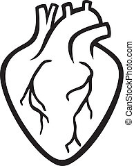 human heart stock photos and images 79 982 human heart pictures and rh canstockphoto com real human heart clipart