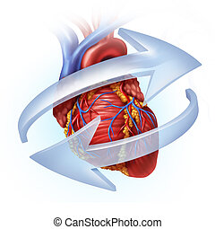 Human Heart Function