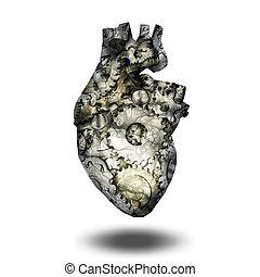 Human heart gears