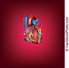 Human heart medical illustration on a bright red background...