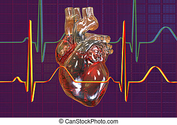 Human heart on background with ECG