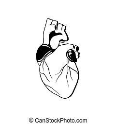 Human heart organ. Vector illustration isolated on white