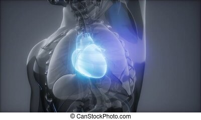 Human Heart Radiology Exam - science anatomy scan of human...