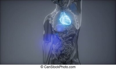 science anatomy scan of human heart glowing