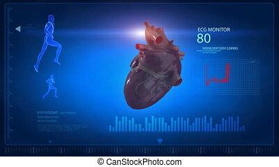 Human heart scan