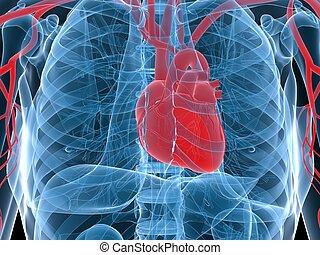 human heart - 3d rendered anatomy illustration of human...