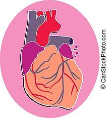 Human Heart - The human heart design
