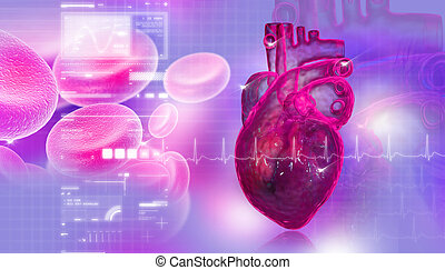 Human heart with blood cell