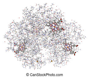 Human hemoglobin (deoxyhemoglobin) with hemes showed in...