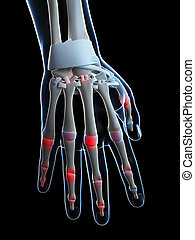 Human highlighted finger joints