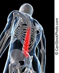 Human highlighted spine - 3d rendered illustration of a...
