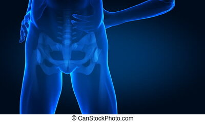 Human hip in detail  - hip concept