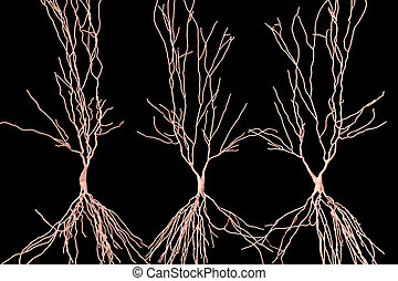 Human hippocampus neurons, computer reconstruction, 3D...