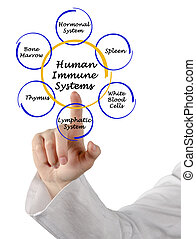Human Immune Systems