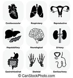 (human, inre, kollektion, organ, system)