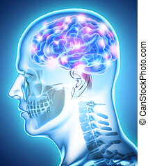 Human Internal Organic - Brain. - Human Internal Organic -...