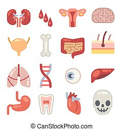 Human internal organs flat vector icons
