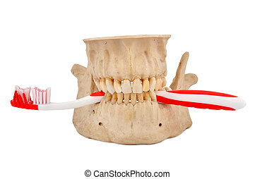 jaw and tooth brush