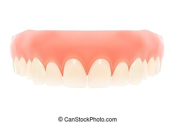 Human jaw. Vector illustration. Isolated on white