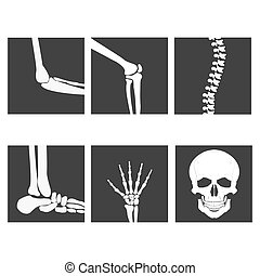 Human joints, knee